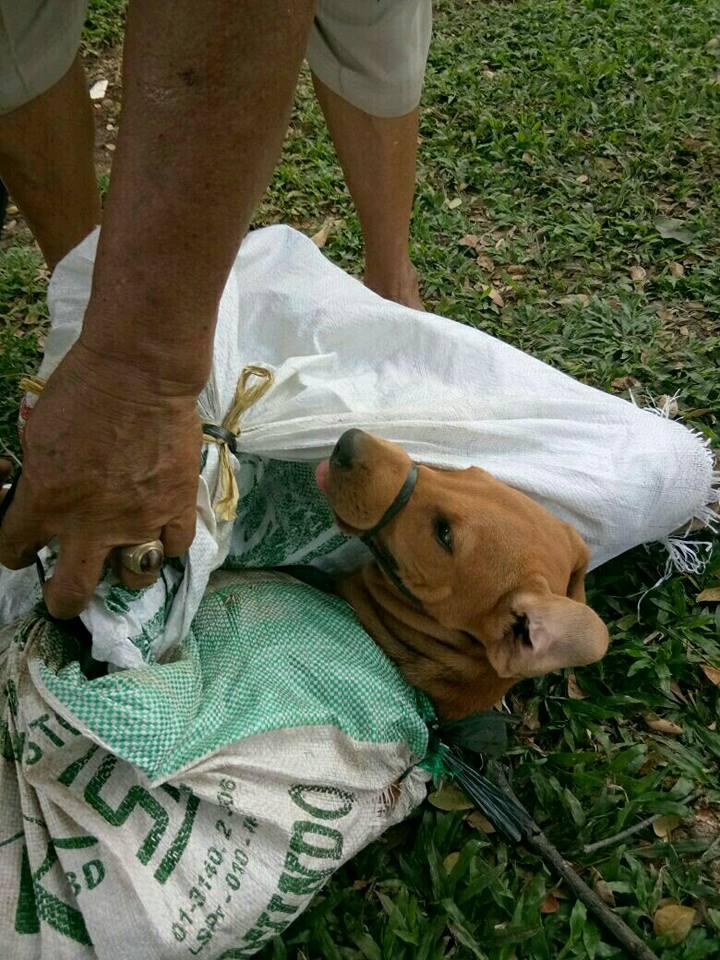 Perro rescatado del comercio de carne