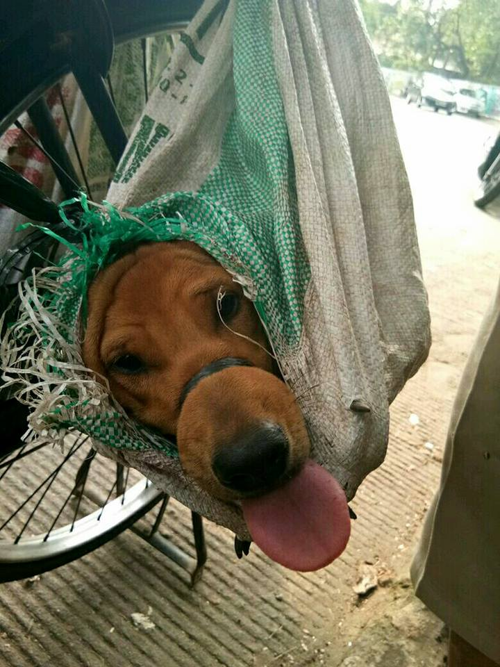 Perro rescatado en Indonesia