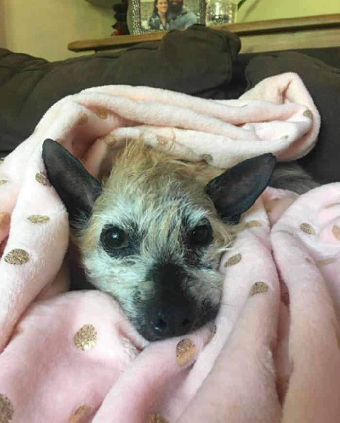 Perro sin pelo rescatado