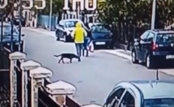 Perro valiente defiende a mujer que iban a robar