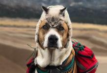 Perro y gato aman viajar juntos
