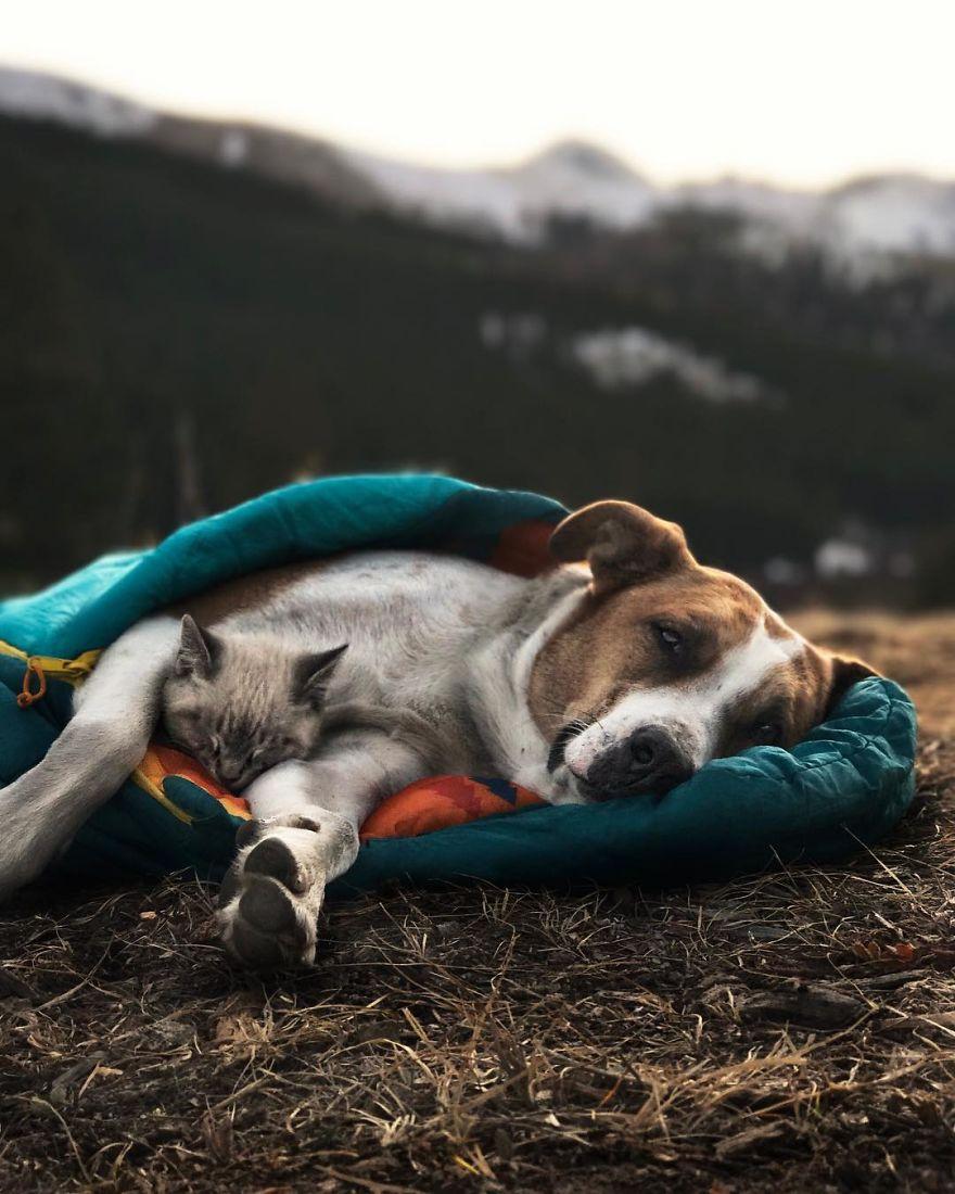 Perro y gato duermen
