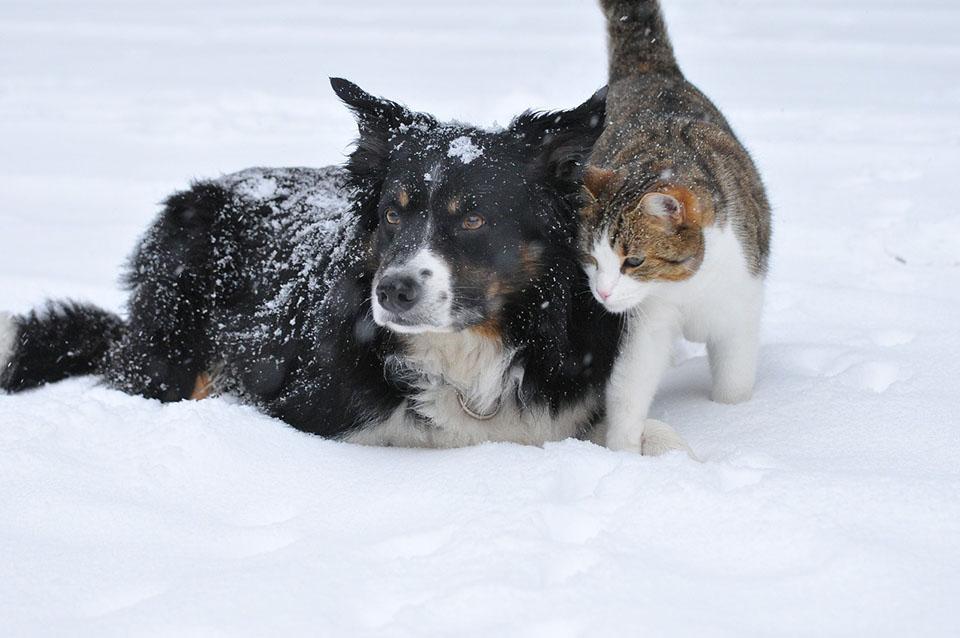 Perro y gato en la nieve