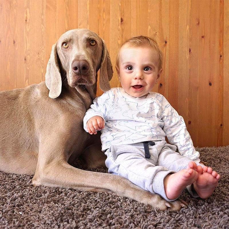 Perro y un bebé