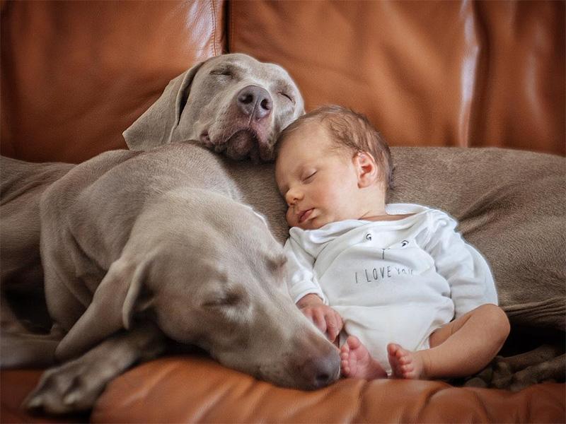 Perros y bebé durmiendo