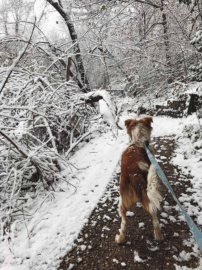 Teddy en la nieve