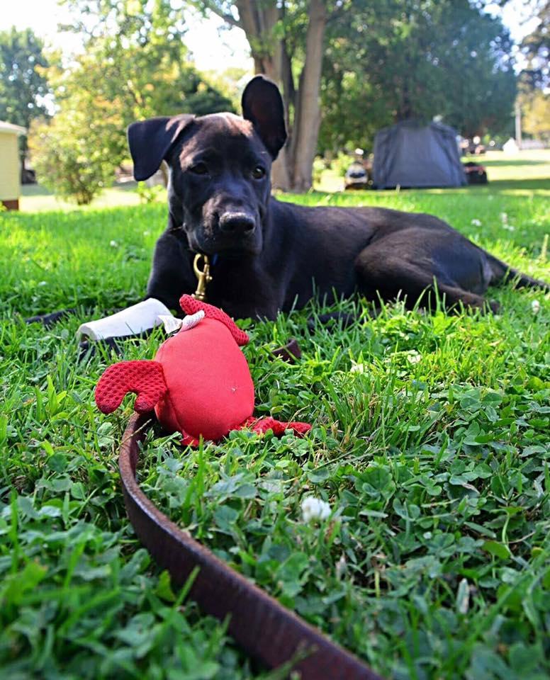 Thor en la hierba