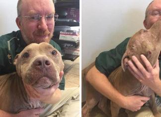 Veterinario debía sacrificar perro pero decidió salvarlo