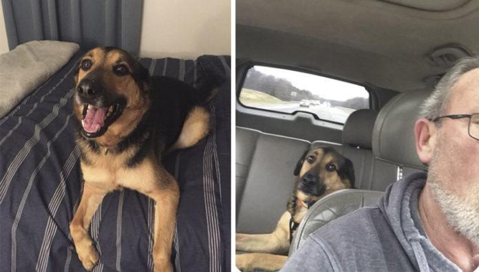 Abuelo cuida de perro y envía adorables mensajes