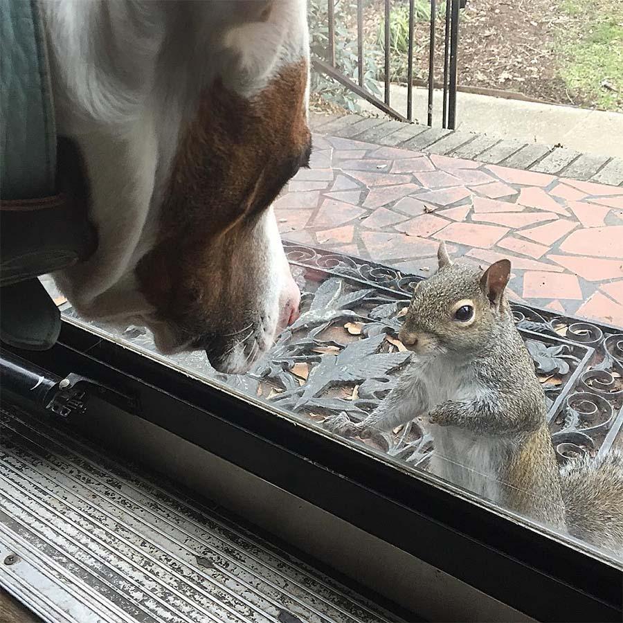 Bella en la ventana