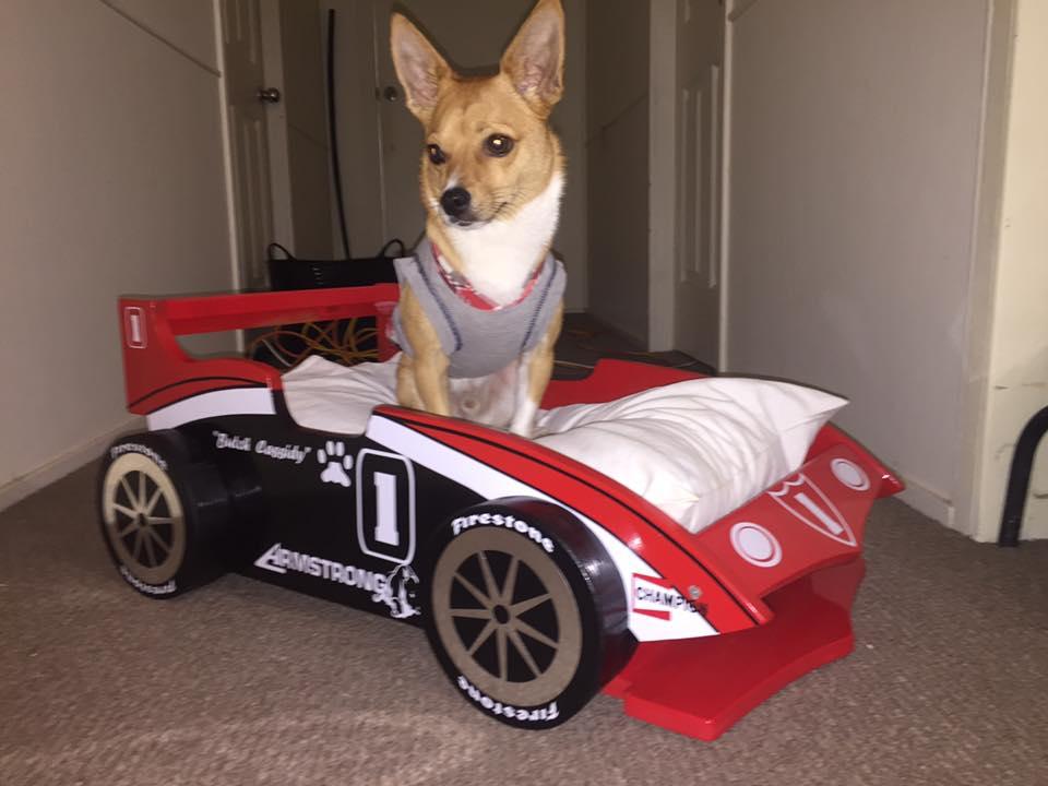 Butch en su cama de auto de carreras