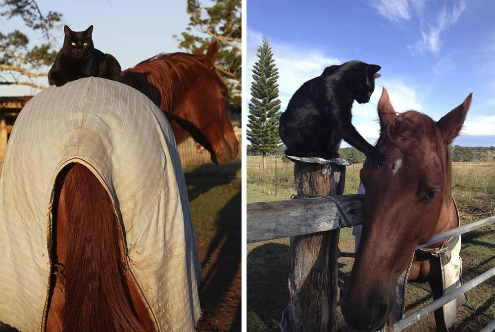 Caballo y gato amigos