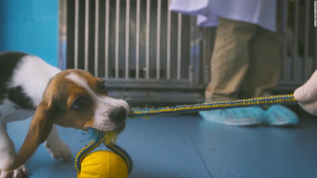 China clona perros enfermos para experimentos