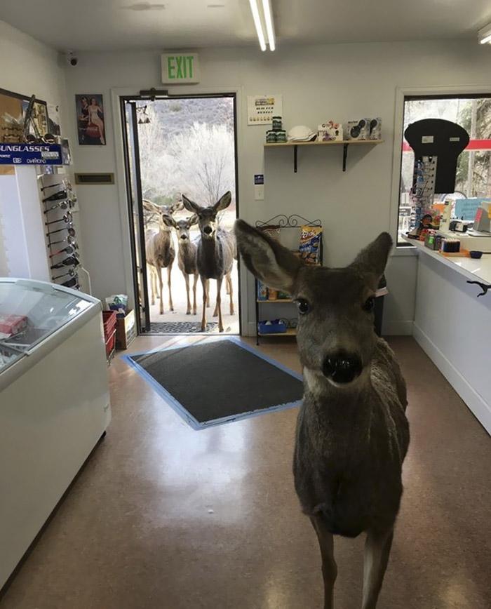 Ciervo lleva familia a tienda de regalos