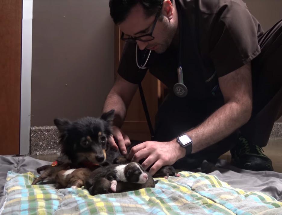 Donde el veterinario