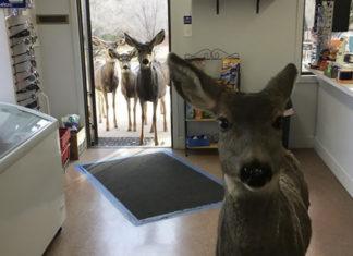 Familia de ciervos en una tienda de regalos
