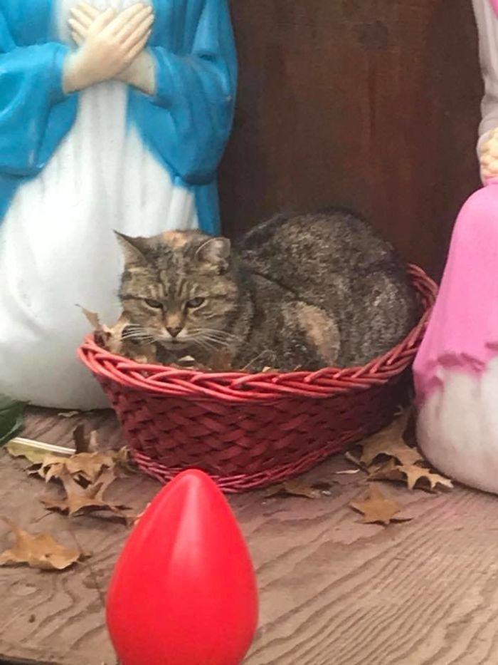 Gato se cuela en el pesebre
