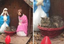 Gato se cuela en pesebre en New York