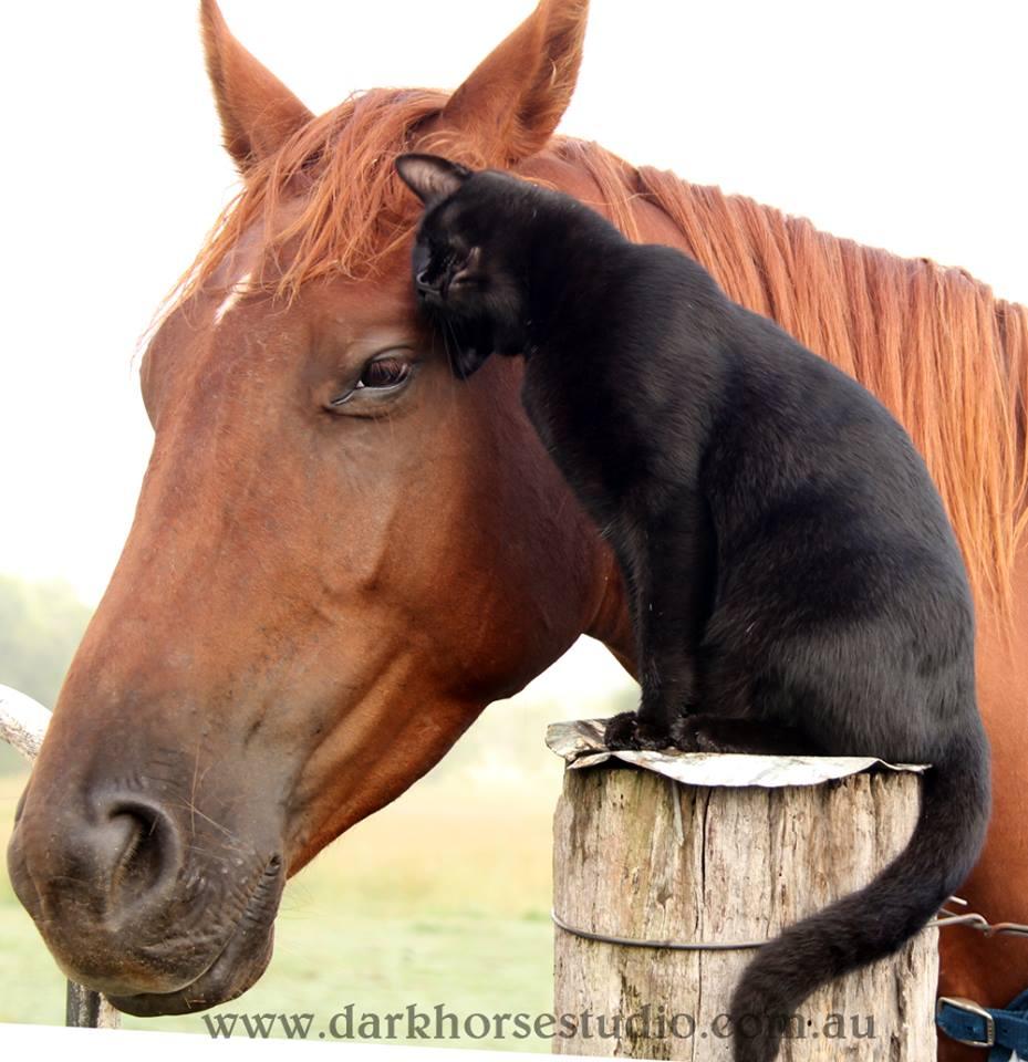 Gato y caballo son amigos