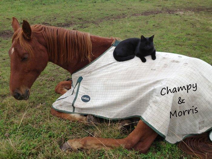 Morris y Champy