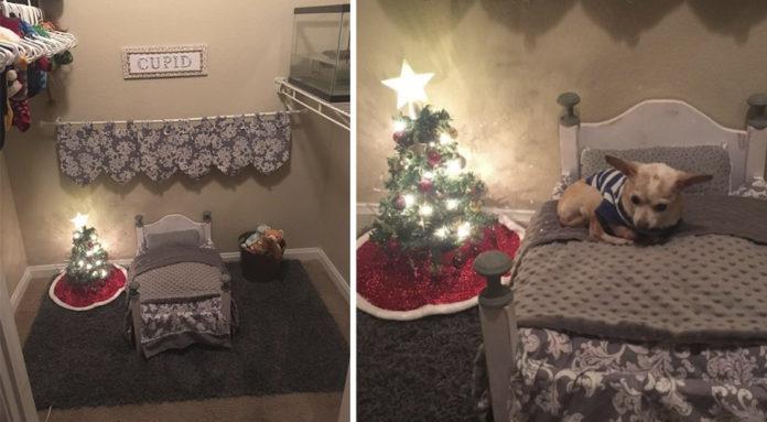 Mujer decora habitación del perro con mini arbol de Navidad