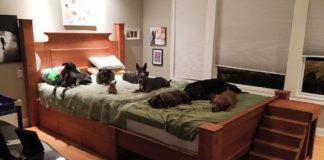 Pareja necesita cama más grande para los perros