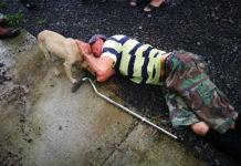 Perrita leal busca ayuda para su padre herido