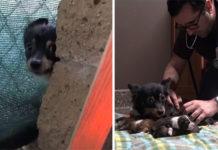 Perrita no quería recibir alimento hasta que sus cachorros estuvieran a salvo