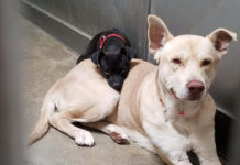 Perrito abandonado en un refugio no se separa de su amigo