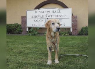 Perro abandonado en una iglesia esperó a su familia