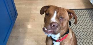 Perro con la cara torcida espera encontrar hogar para Navidad