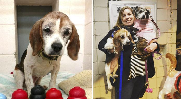 Perro mayor enfermo encuentra hogar para pasar su última navidad
