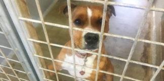 Perro pasará su segunda Navidad en un refugio