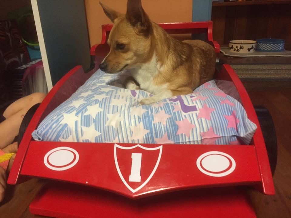 Perro recibe cama de auto de carreras en Navidad