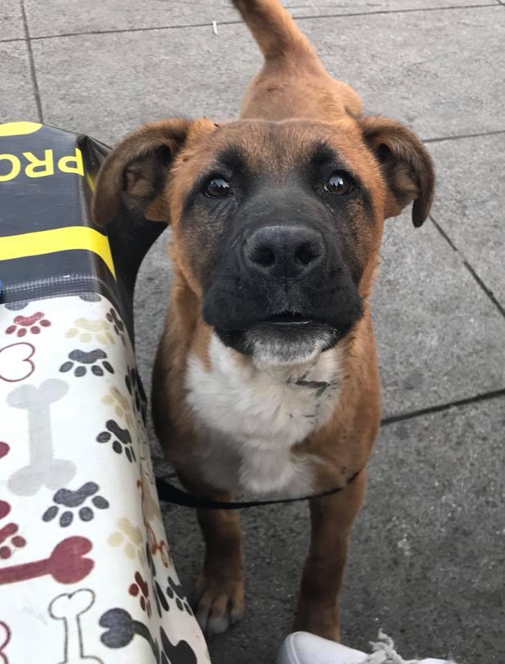 Perro rescatado Basílica