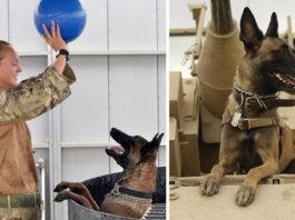 Perros del ejército serán sacrificados