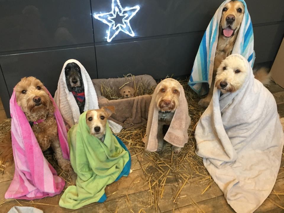 Perros protagonizan escena de Natividad