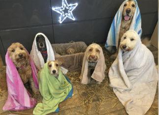 Perros recrean escena de la Natividad