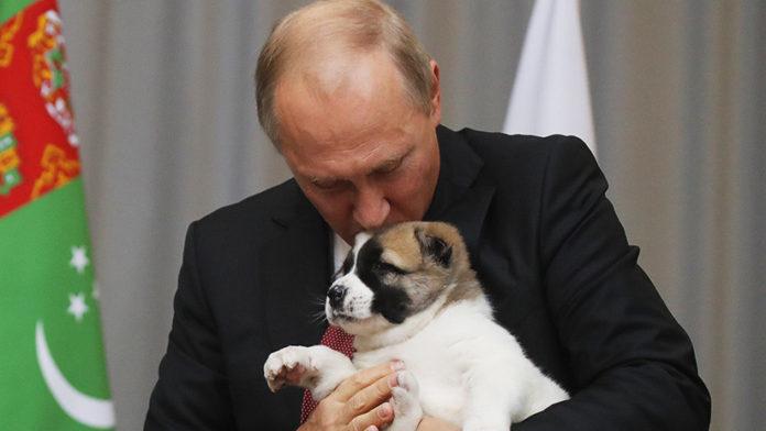 Presidente Ruso firma ley para endurecer el castigo por crueldad animal