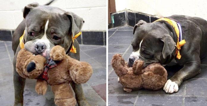 Rocky todo lo que tiene es este juguete antes de ser sacrificado