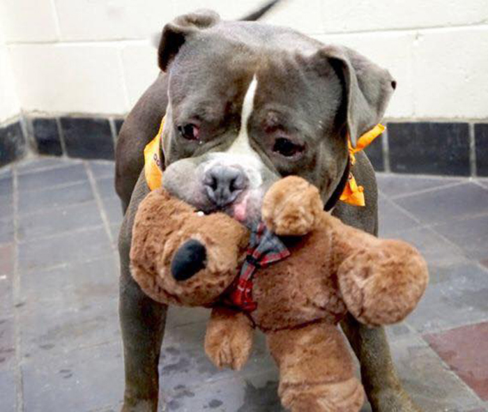Rocky y su oso de peluche