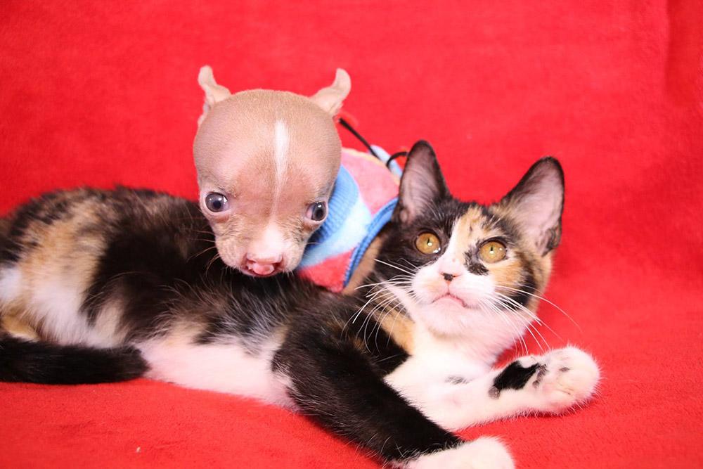 Sasha y un gato