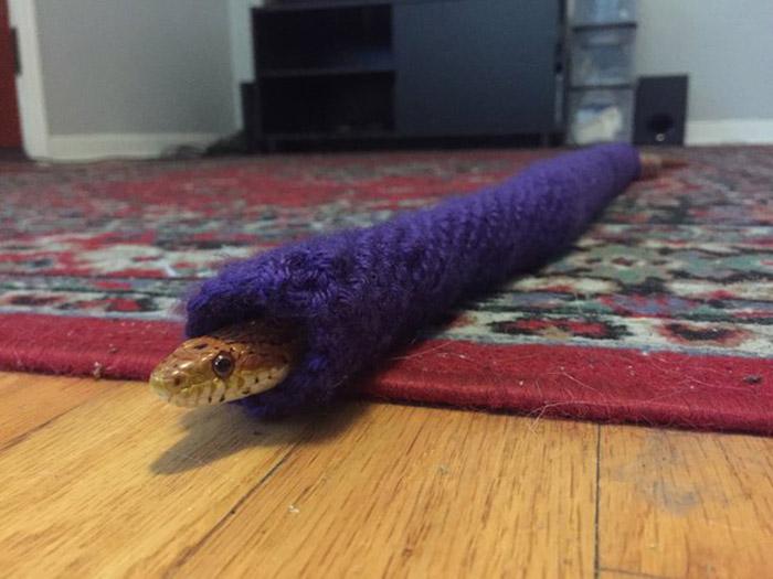 Serpiente recibe suéter tejido para Navidad
