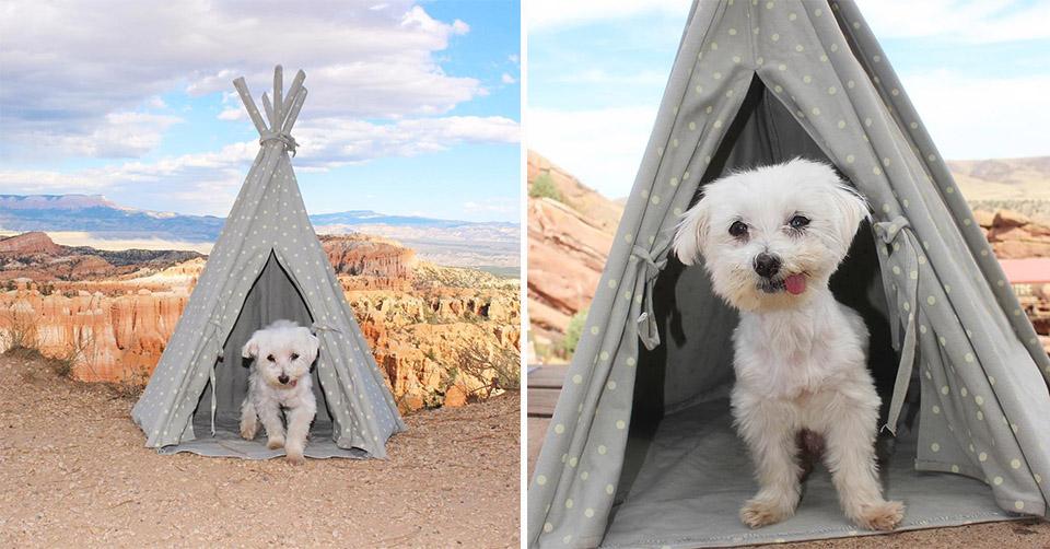 Tusk acampando