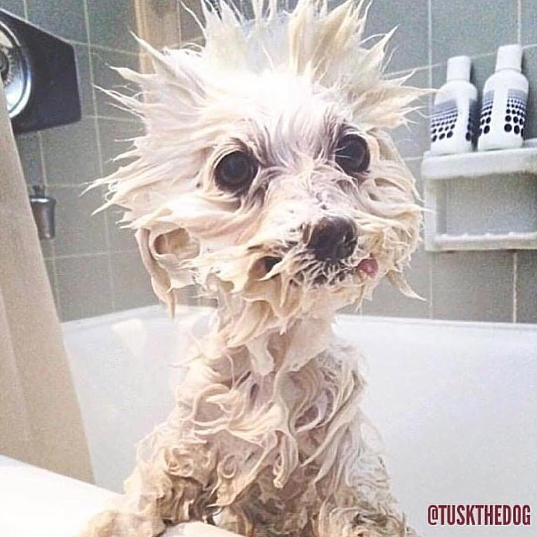Tusk bañándose