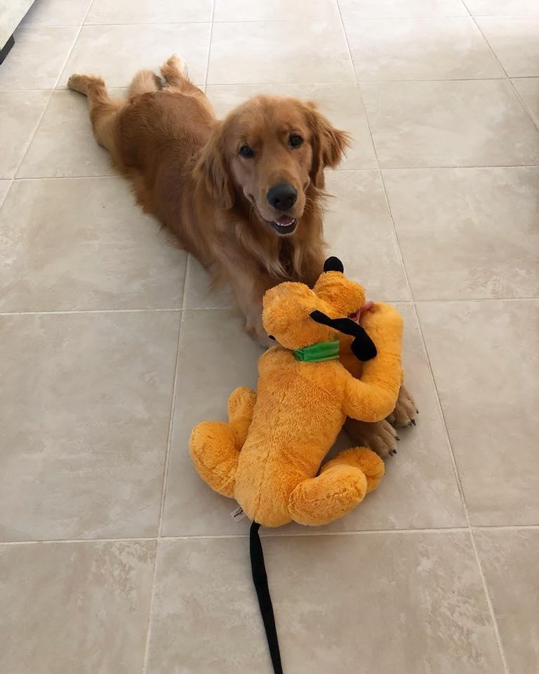 Vede il suo giocattolo preferito prendere vita, la reazione