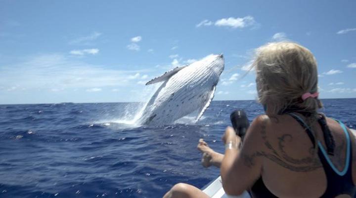 Ballena salta en el agua
