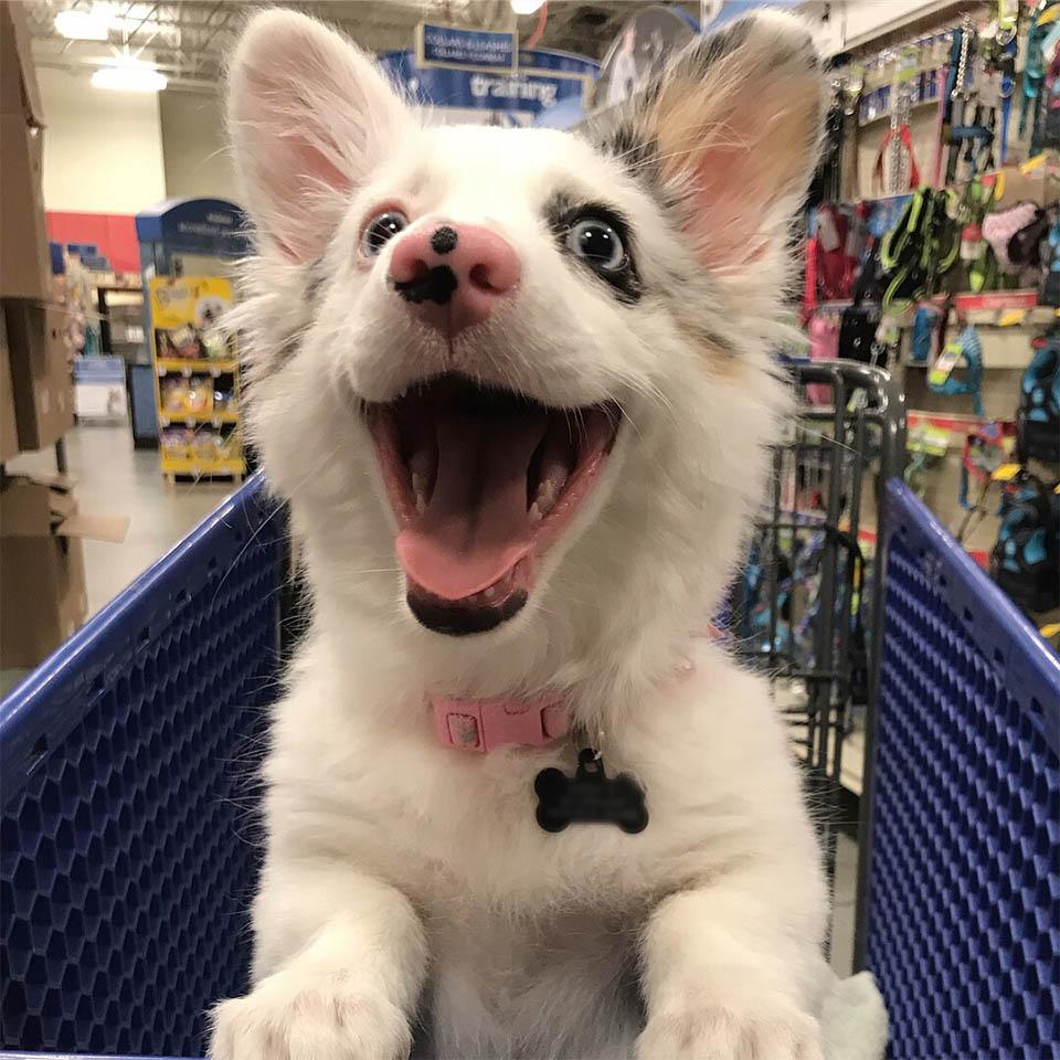 Cachorro de compras