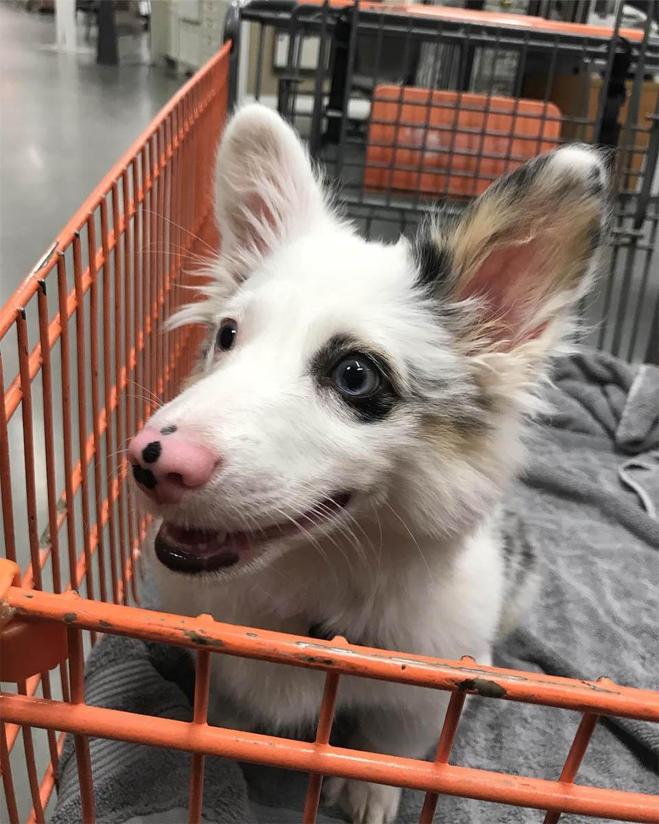 Cachorro en la tienda