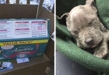 Cachorros congelados abandonados dentro de una caja